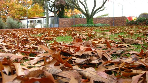 Autumn Leaves (9)